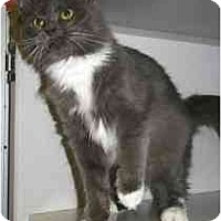 Adopt A Pet :: Muffy - Marietta, GA