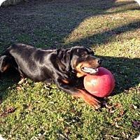 Adopt A Pet :: Aries - Sandston, VA
