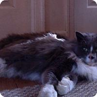 Adopt A Pet :: Greyson - Temple, PA