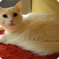 Adopt A Pet :: Chardonnay - The Colony, TX