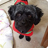 Adopt A Pet :: JOEY - Mission Viejo, CA