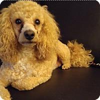 Adopt A Pet :: Rockie-adoption pending - Mississauga, ON