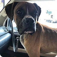 Adopt A Pet :: JoJo - Brentwood, TN