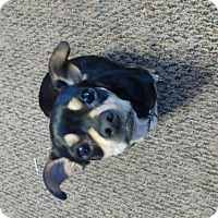 Adopt A Pet :: SAMMIE (WB) - Tampa, FL