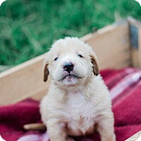 Adopt A Pet :: Kelso $250 - Seneca, SC