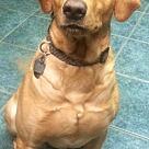 Adopt A Pet :: Tonto - Denton, TX
