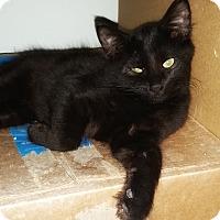 Adopt A Pet :: Nitro - Jackson, MO