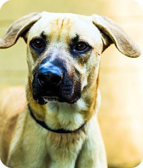 Shepherd (Unknown Type) Mix Dog for adoption in Port Washington, New York - Rocco