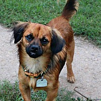 Adopt A Pet :: Lenny - Shreveport, LA