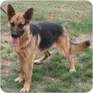 German Shepherd Dog Dog for adoption in McDonough, Georgia - Kelsie