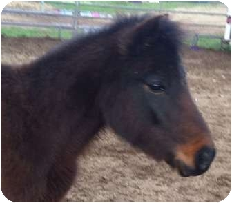 Pony - Other Mix for adoption in Sac, California - Annie