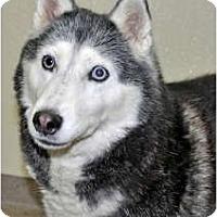 Adopt A Pet :: Blinky - Port Washington, NY