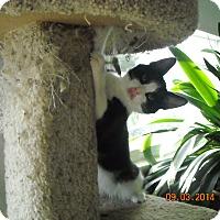 Adopt A Pet :: Bradley - Riverside, RI