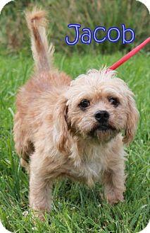 Terrier (Unknown Type, Medium) Mix Dog for adoption in Lewisburg, West Virginia - Jacob