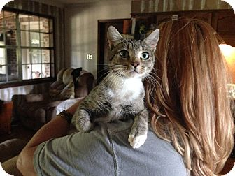 Domestic Shorthair Kitten for adoption in Marietta, Georgia - Baby