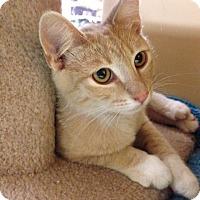 Adopt A Pet :: Django - Foothill Ranch, CA