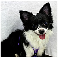 Adopt A Pet :: Reno - Forked River, NJ