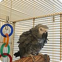 Adopt A Pet :: Joey - Punta Gorda, FL