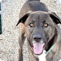Adopt A Pet :: Riley - Meridian, ID