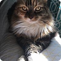 Adopt A Pet :: Savannah - Arlington, VA