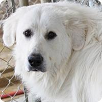 Adopt A Pet :: Prince Christian - Jewett City, CT