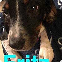 Adopt A Pet :: Fritz - Foristell, MO