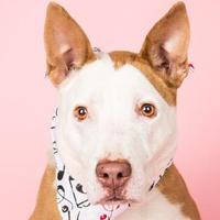 Adopt A Pet :: Rudy - Longmont, CO