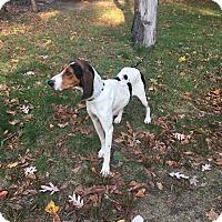 Adopt A Pet :: Ella Enchanted - Shelter Island, NY