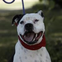 Adopt A Pet :: Kinkaid - Heber City, UT
