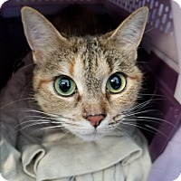 Adopt A Pet :: Soshi - Jamestown, MI