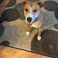 Adopt A Pet :: Shane aka: Vinny - Denver, CO