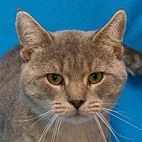 Adopt A Pet :: Raphael - Westland, MI