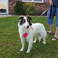 Adopt A Pet :: Rosie - Parsippany, NJ