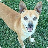Adopt A Pet :: Herbie - Winchester, CA