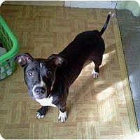 Adopt A Pet :: Ivy - Indianapolis, IN