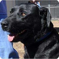 Adopt A Pet :: Remington - Altmonte Springs, FL