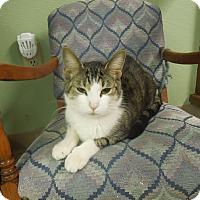 Adopt A Pet :: Taylor - Medina, OH