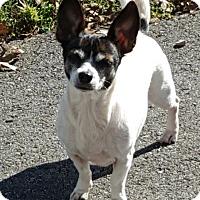 Adopt A Pet :: Sage - Knoxville, TN