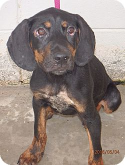 Hound (Unknown Type) Mix Dog for adoption in Beaumont, Texas - Vince