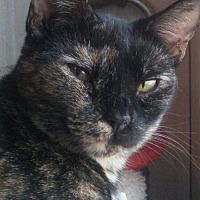 Adopt A Pet :: Sierra - Bertram, TX