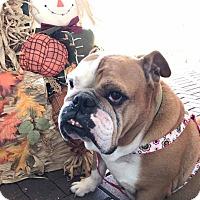 Adopt A Pet :: Cassie - Odessa, FL