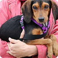 Adopt A Pet :: Ruthie-Adoption Pending - Pinehurst, NC