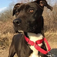 Adopt A Pet :: Pepper - Natchitoches, LA