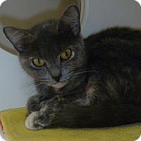 Adopt A Pet :: Fiona - Hamburg, NY