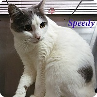 Adopt A Pet :: Speedy - El Cajon, CA