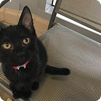 Adopt A Pet :: Eva - Chula Vista, CA