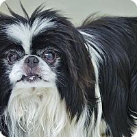Adopt A Pet :: Chappie - Chambersburg, PA