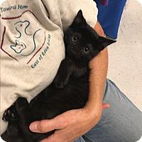 Adopt A Pet :: Jake - Tracy, CA