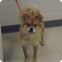 Adopt A Pet :: Lenny - Lonely Heart - Gulfport, MS