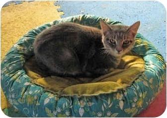 Domestic Mediumhair Kitten for adoption in McDonough, Georgia - Mandy